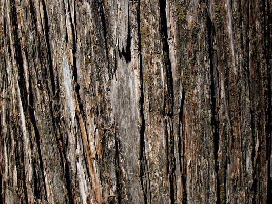 tree bark: designreviver.com/freebies/25-great-free-photoshop-texture-packs