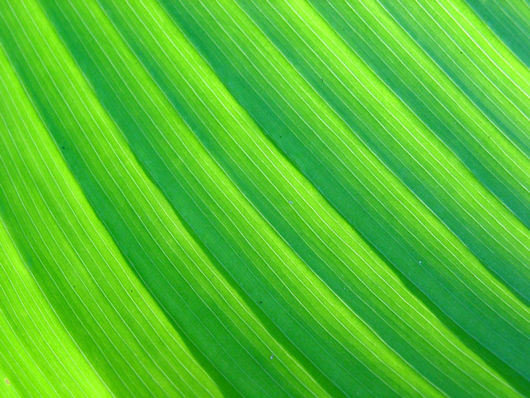 leaf ps texture