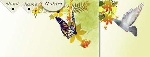 design-nature-theme-header-for-web-site-78